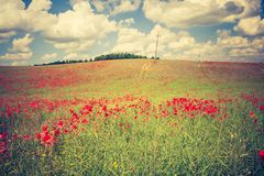 Vintage photo of poppy field Stock Image