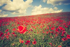 Vintage photo of poppy field Royalty Free Stock Photography
