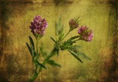 Vintage photo of a purple wildflower Royalty Free Stock Photography