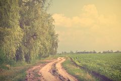 Vintage photo of a road near the forest Royalty Free Stock Photo