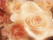 Vintage photo of roses Royalty Free Stock Images
