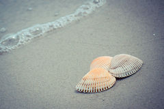 Vintage photo, Seashells at the beach by the sea Royalty Free Stock Images