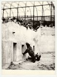 Vintage photo shows people visit ZOO. Two bears in bear moat. THE CZECHOSLOVAK SOCIALIST REPUBLIC - CIRCA 1980s: Vintage photo shows people visit ZOO. Two bears Stock Photography
