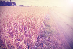 Vintage photo of side road through field at sunset Stock Photography