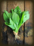 Vintage photo of spinach Stock Image