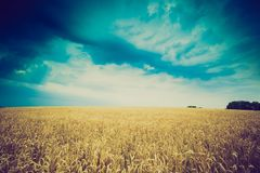 Vintage photo of storm clouds over wheat field Royalty Free Stock Photo