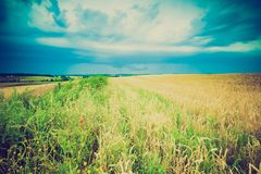 Vintage photo of storm clouds over wheat field Royalty Free Stock Images