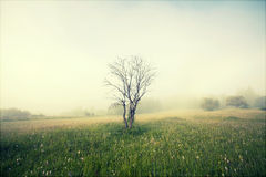 Vintage photo of summer field in the morning fog Stock Images