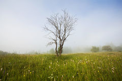 Vintage photo of summer field in the morning fog Stock Photo