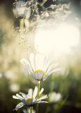 Vintage photo of summer meadow Royalty Free Stock Photos