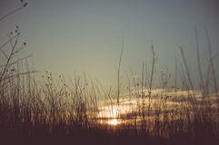 Vintage photo of summer meadow at sunset. Stock Image