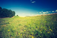 Vintage photo of summertime meadow under blue sky Stock Photography