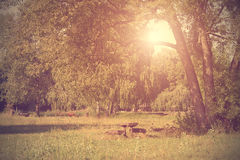 Vintage photo of a sunny park Royalty Free Stock Photography