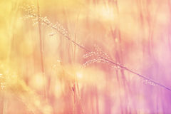 Vintage photo of sunset meadow Royalty Free Stock Photography