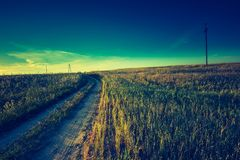 Vintage photo of sunset over corn field at summer Royalty Free Stock Image