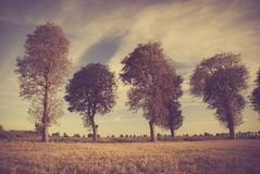 Vintage photo of sunset over trees an field Royalty Free Stock Image