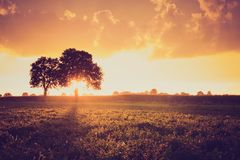 Vintage photo of sunset over trees an field Royalty Free Stock Photography