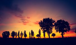 Vintage photo of sunset over trees an field Stock Image