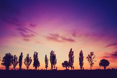 Vintage photo of sunset over trees an field Royalty Free Stock Photos
