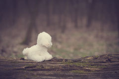 Vintage photo of a toy dog. In park Stock Image