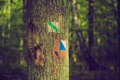 Vintage photo of trail sign painted on tree bark in summertime forest. Royalty Free Stock Photography