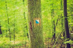 Vintage photo of trail sign painted on tree bark in summertime forest. Royalty Free Stock Image