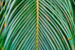 Vintage photo tropical fern green leaf on dark green background for print design. Tropical floral pattern, real photo. Vintage photo tropical fern green leaf on Royalty Free Stock Images