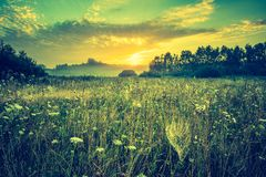 Vintage photo of vibrant landscape with foggy meadow Stock Image