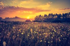 Vintage photo of vibrant landscape with foggy meadow royalty free stock photos