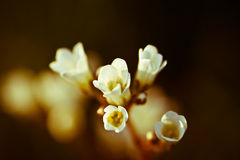 Vintage photo of white cherry tree flower in spring. Floral background stock images