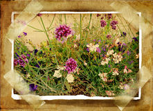 Vintage photoalbum. Old photo-album page with floral field card Royalty Free Stock Image