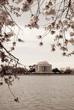 Vintage photograph of Jefferson Memorial framed wi. Cherry blossom festival in Washington DC. Vintage photo of the Jefferson Memorial framed with cherry blossoms Royalty Free Stock Photo