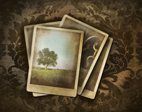 Vintage photos on dark damask Stock Images