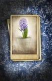 Vintage photos on floral background vector illustration