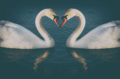 Vintage phoyo of romantic two swans, Royalty Free Stock Image