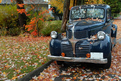 Vintage Pickup Truck in Fall. A vintage Dodge pickup truck stands under a maple tree in the fall stock image