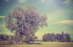 Vintage picture of autumn field with trees, retro filtered. Royalty Free Stock Photos