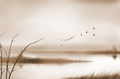 Vintage picture of birds and fog in morning canal. Vintage picture of birds and fog over the canal in the morning countryside Royalty Free Stock Photos