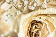 Vintage picture, nice soft background,small flowers Stock Photography