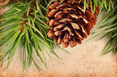 Vintage pine branch Stock Images
