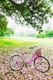Vintage pink bicycles in the garden flower outdoor summer Life is good in the garden. Vintage pink bicycles in the garden flower outdoor summer Life is good in Royalty Free Stock Photography