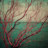 Vintage pink dry tree at lake Stock Images