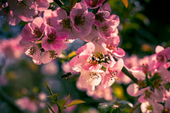Vintage pink flowers. A large number of pink flowers in vintage style Stock Image