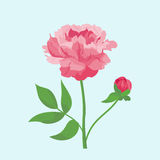 Vintage pink peony flower can be used as greeting card, invitation card for wedding, birthday and other holiday summer Stock Photo