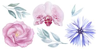 Vintage pink and purple flowers watercolour set. Rose, cornflower, orchid blossom. greeting, invitation, wedding. Vintage pink and purple flowers watercolour set Stock Photography
