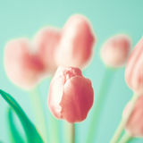 Vintage pink tulips Royalty Free Stock Photography