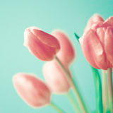 Vintage pink tulips Royalty Free Stock Photos