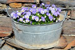 Vintage planter. Pansies in vintage brass planter Royalty Free Stock Image