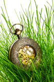 Vintage pocket watch in green grass Royalty Free Stock Images