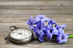 Vintage pocket watch and hyacinth Stock Photos